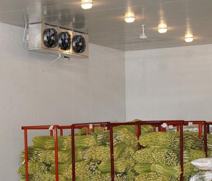 蔬菜冷库建造