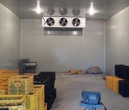 水果冷藏库建造